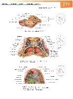 Sobotta Atlas of Human Anatomy  Head,Neck,Upper Limb Volume1 2006, page 286