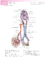 Sobotta Atlas of Human Anatomy  Head,Neck,Upper Limb Volume1 2006, page 29