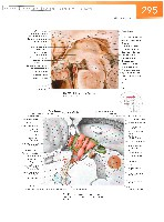 Sobotta Atlas of Human Anatomy  Head,Neck,Upper Limb Volume1 2006, page 302