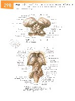 Sobotta Atlas of Human Anatomy  Head,Neck,Upper Limb Volume1 2006, page 305