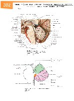 Sobotta Atlas of Human Anatomy  Head,Neck,Upper Limb Volume1 2006, page 309