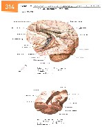Sobotta Atlas of Human Anatomy  Head,Neck,Upper Limb Volume1 2006, page 321