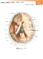 Sobotta Atlas of Human Anatomy  Head,Neck,Upper Limb Volume1 2006, page 328