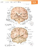 Sobotta Atlas of Human Anatomy  Head,Neck,Upper Limb Volume1 2006, page 336
