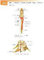 Sobotta Atlas of Human Anatomy  Head,Neck,Upper Limb Volume1 2006, page 351