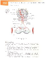 Sobotta Atlas of Human Anatomy  Head,Neck,Upper Limb Volume1 2006, page 357