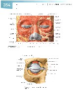 Sobotta Atlas of Human Anatomy  Head,Neck,Upper Limb Volume1 2006, page 361