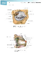 Sobotta Atlas of Human Anatomy  Head,Neck,Upper Limb Volume1 2006, page 363