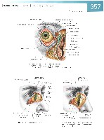 Sobotta Atlas of Human Anatomy  Head,Neck,Upper Limb Volume1 2006, page 364