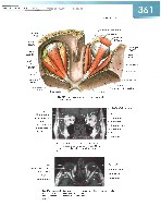 Sobotta Atlas of Human Anatomy  Head,Neck,Upper Limb Volume1 2006, page 368