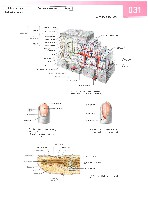 Sobotta Atlas of Human Anatomy  Head,Neck,Upper Limb Volume1 2006, page 38