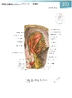 Sobotta Atlas of Human Anatomy  Head,Neck,Upper Limb Volume1 2006, page 380