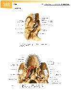 Sobotta Atlas of Human Anatomy  Head,Neck,Upper Limb Volume1 2006, page 395