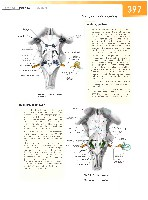 Sobotta Atlas of Human Anatomy  Head,Neck,Upper Limb Volume1 2006, page 404