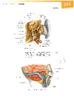 Sobotta Atlas of Human Anatomy  Head,Neck,Upper Limb Volume1 2006, page 406