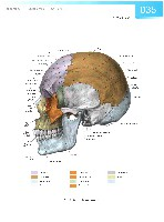 Sobotta Atlas of Human Anatomy  Head,Neck,Upper Limb Volume1 2006, page 42