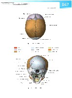 Sobotta Atlas of Human Anatomy  Head,Neck,Upper Limb Volume1 2006, page 54