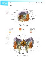 Sobotta Atlas of Human Anatomy  Head,Neck,Upper Limb Volume1 2006, page 61