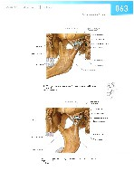 Sobotta Atlas of Human Anatomy  Head,Neck,Upper Limb Volume1 2006, page 70