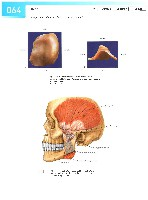 Sobotta Atlas of Human Anatomy  Head,Neck,Upper Limb Volume1 2006, page 71