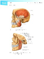 Sobotta Atlas of Human Anatomy  Head,Neck,Upper Limb Volume1 2006, page 73