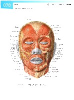 Sobotta Atlas of Human Anatomy  Head,Neck,Upper Limb Volume1 2006, page 77