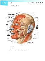 Sobotta Atlas of Human Anatomy  Head,Neck,Upper Limb Volume1 2006, page 79