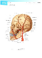 Sobotta Atlas of Human Anatomy  Head,Neck,Upper Limb Volume1 2006, page 81