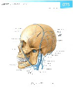Sobotta Atlas of Human Anatomy  Head,Neck,Upper Limb Volume1 2006, page 82