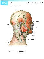 Sobotta Atlas of Human Anatomy  Head,Neck,Upper Limb Volume1 2006, page 83