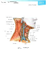 Sobotta Atlas of Human Anatomy  Head,Neck,Upper Limb Volume1 2006, page 84