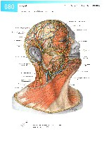 Sobotta Atlas of Human Anatomy  Head,Neck,Upper Limb Volume1 2006, page 87