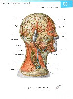 Sobotta Atlas of Human Anatomy  Head,Neck,Upper Limb Volume1 2006, page 88