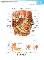 Sobotta Atlas of Human Anatomy  Head,Neck,Upper Limb Volume1 2006, page 90