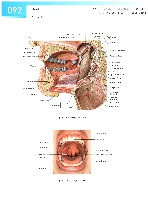 Sobotta Atlas of Human Anatomy  Head,Neck,Upper Limb Volume1 2006, page 99